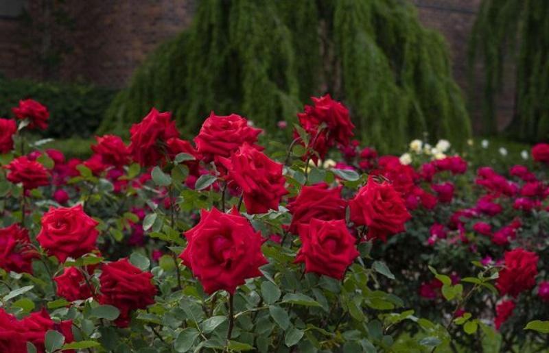 Ý nghĩa của giấc mơ thấy nhiều hoa